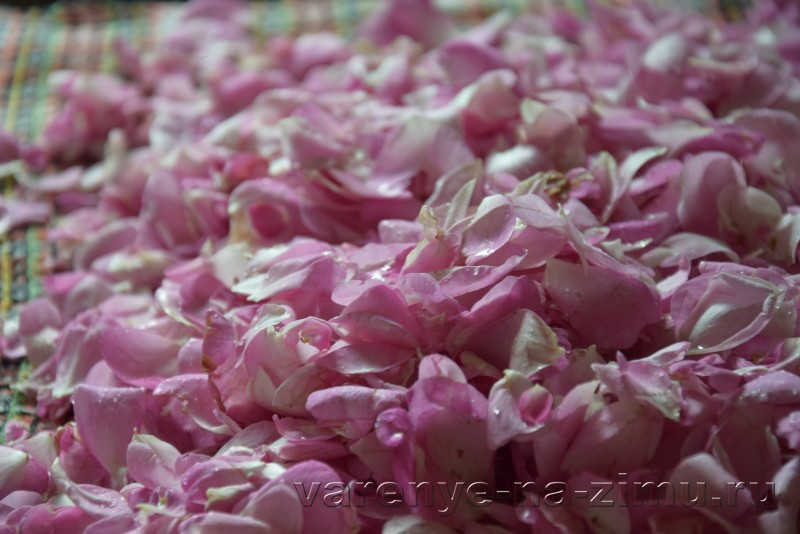 Варенье из лепестков роз: фото 2
